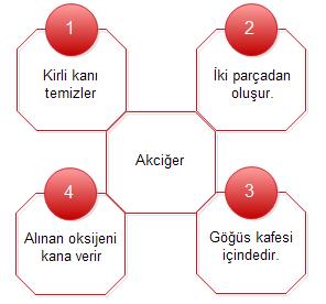 SolunumSistemiTest-1-soru1