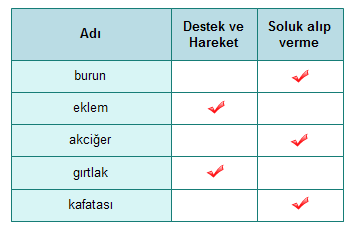 SolunumSistemiTest-1-soru2